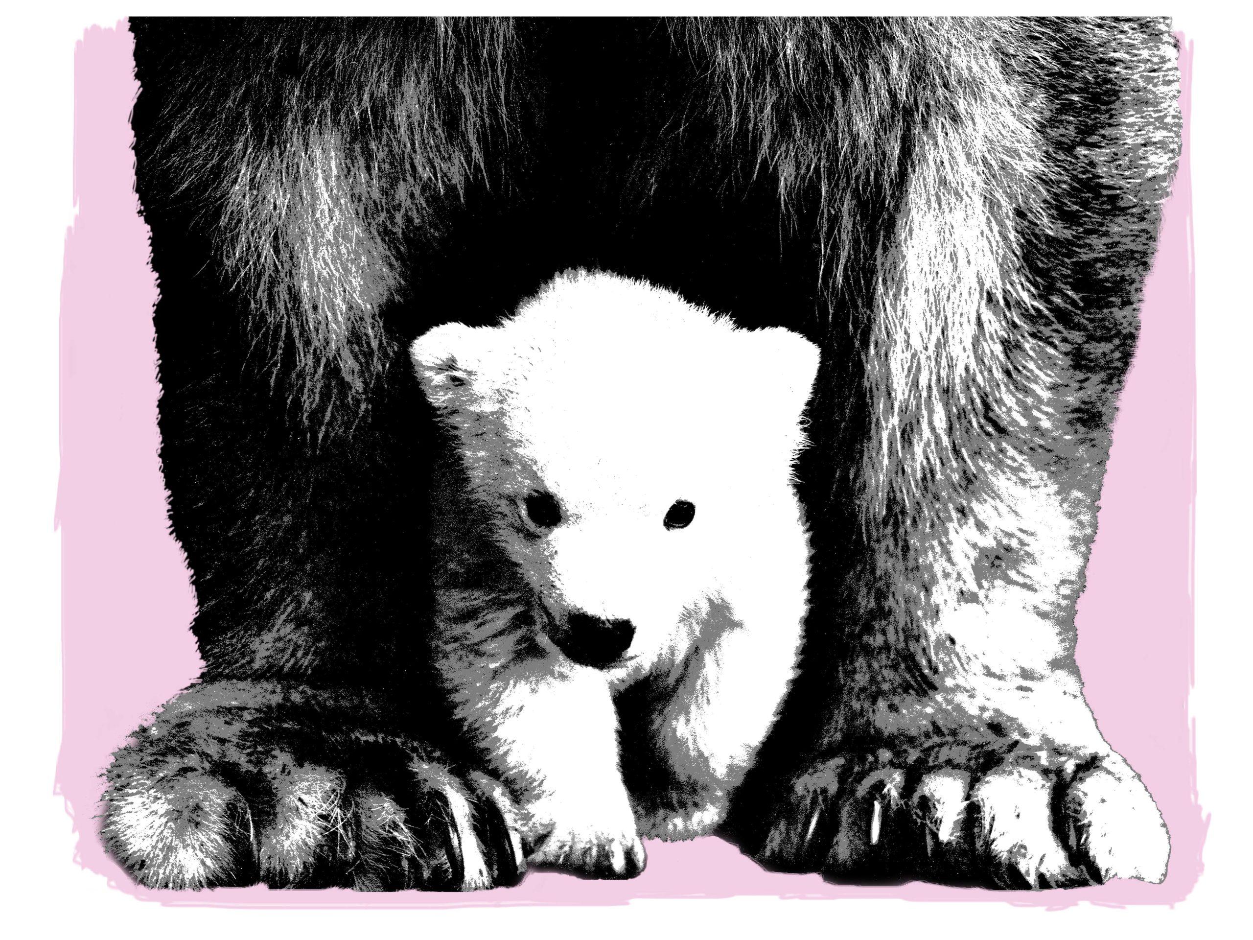 Mama bear rosa 30 x 40 (trykk) | 1200,-